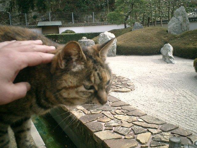 07)鎌倉市材木座「光明寺」手招きしたら寄って来た'トラシマ2号'(本名'ミミ')。